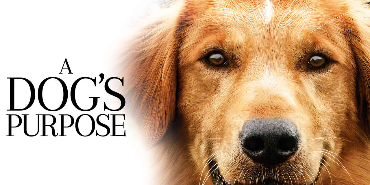 A DogS Purpose Stream